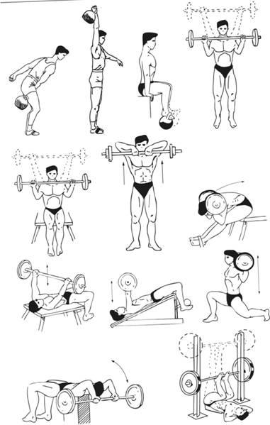Комплекс упражнений штанга и гантели